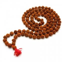 Rudraksha in Molarband